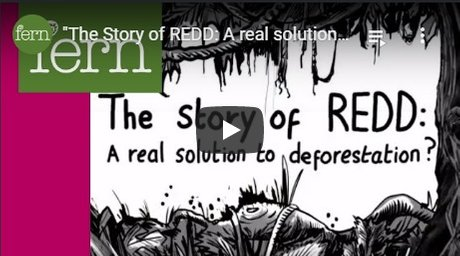 2012-04-24-biomassmurder-org-the-story-of-redd-a-real-solution-to-deforestation-fern-english