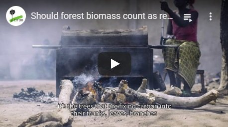 2018-01-17-biomassmurder-org-should-forest-biomass-count-as-renewable-energy-cifor-english