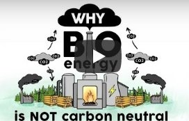 Bio Mass Murder Youtube Animation Video Why Burning Biomass is not Carbon Neutral